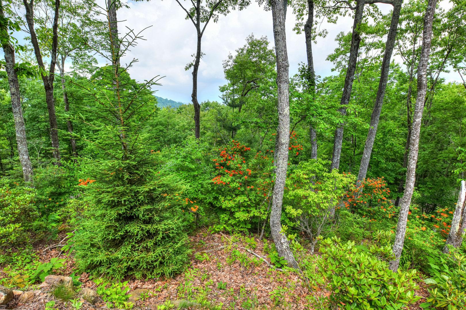 Balsam mountain preserve corkscrew way balsam mountain for Balsam mountain